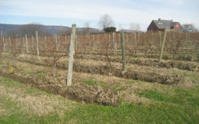 Hudson Valley Soil and the Vines
