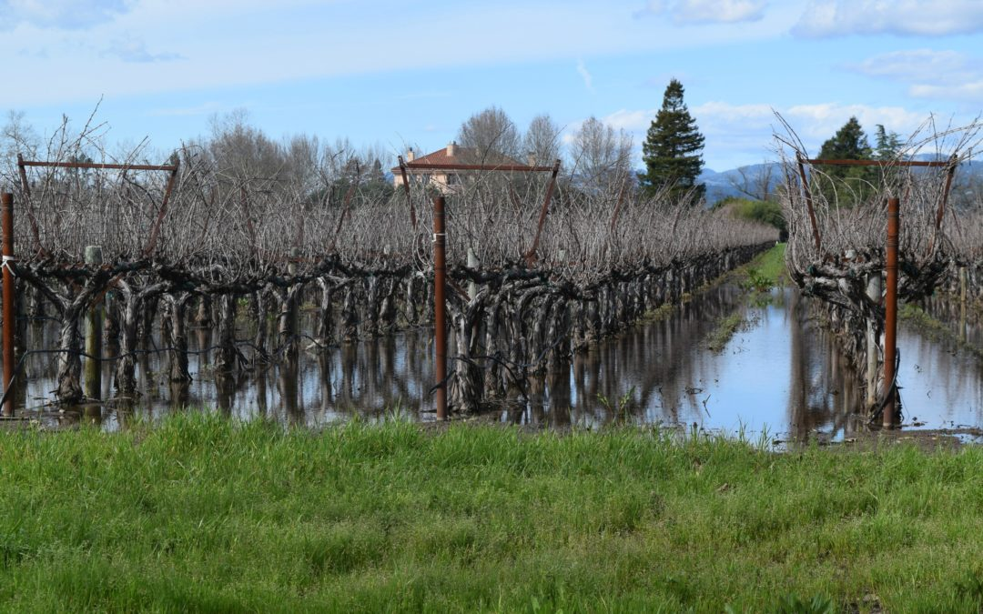 What the California Rains Mean to the Vineyards