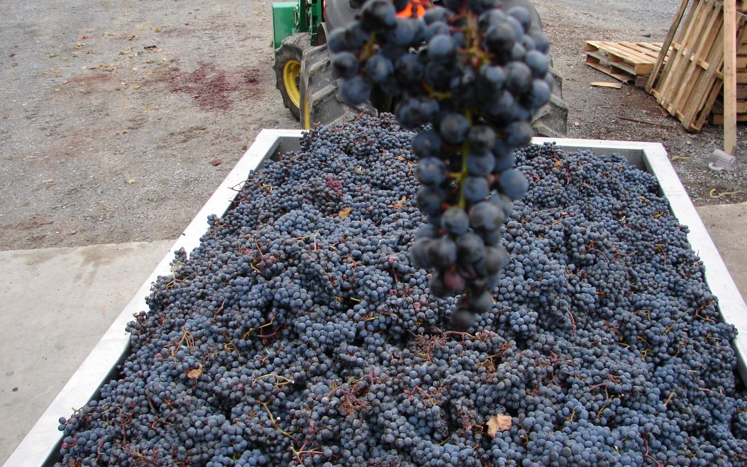 "Hudson Valley Embraces ""Cabernet Franc"" As Their Signature Grape – Launches Hudson Valley Cabernet Franc Coalition"