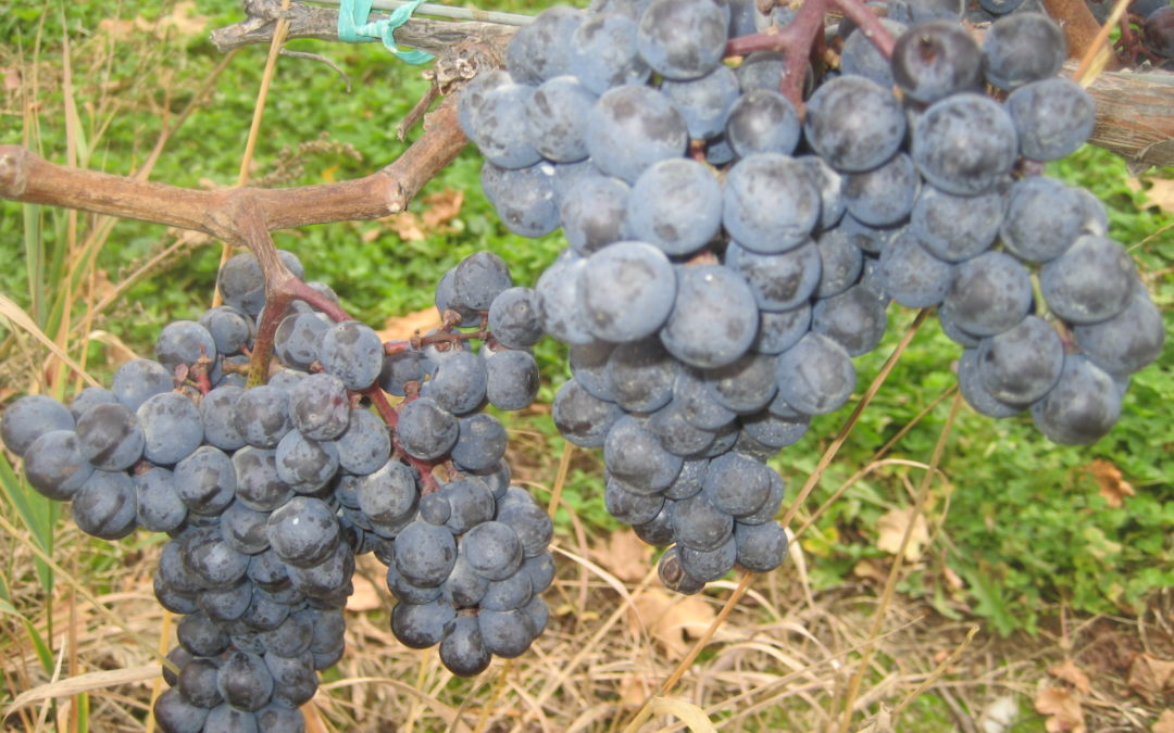 Roadtrip: Traveling the Hudson Valley Cabernet Franc Trail