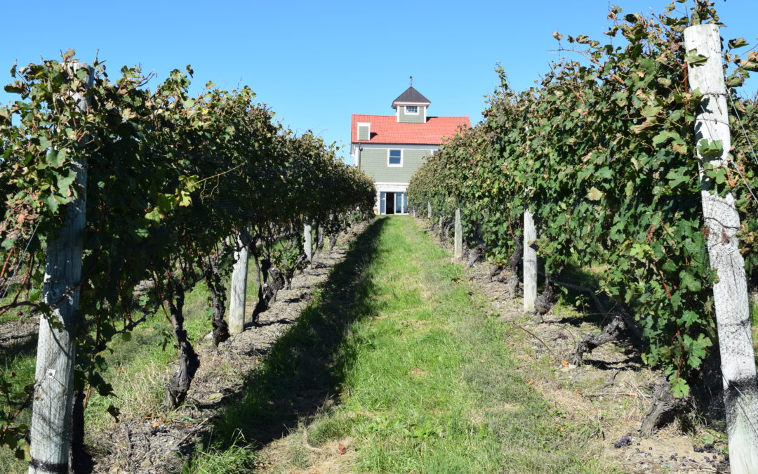 An Afternoon with  Matt Spaccarelli at Benmarl Winery & Fjord Vineyards