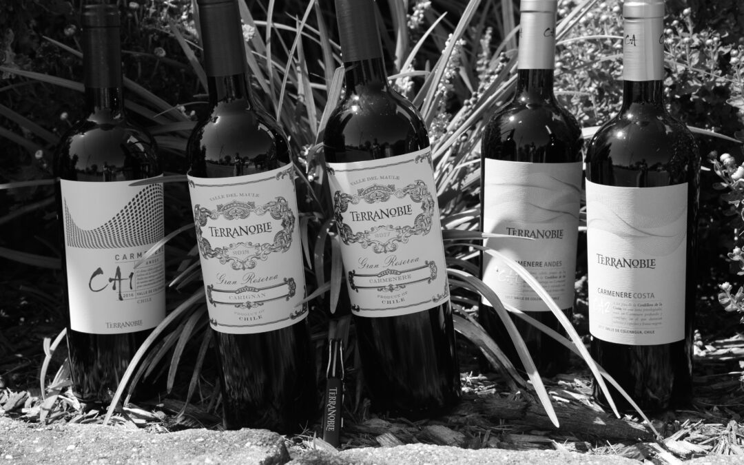 25 Years of Carmenere – The Carmenere Evolution of TerraNoble