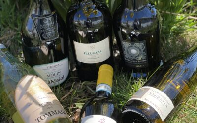 Lugana Wines – As Fresh as Spring Flowers